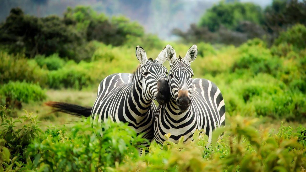 Sürprizlerle dolu sihirli ülke: Kenya - Sayfa 1