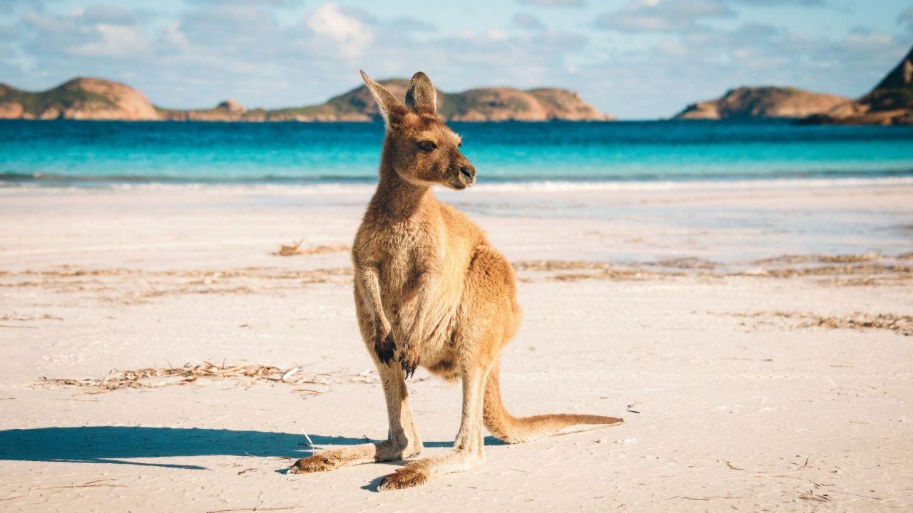 Koalalar ve kangurular diyarı: Avustralya - Sayfa 3