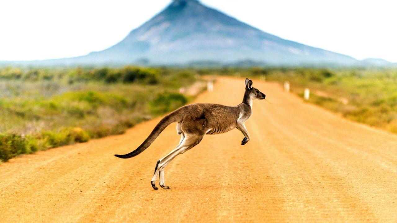 Koalalar ve kangurular diyarı: Avustralya - Sayfa 4