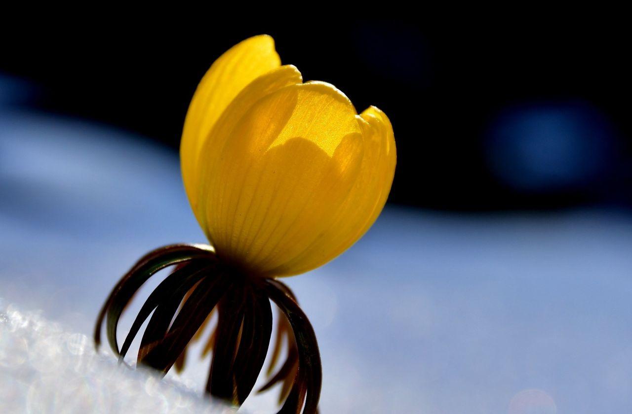 Kar ve çiçeklerin buluşması hayran bıraktı - Sayfa 1