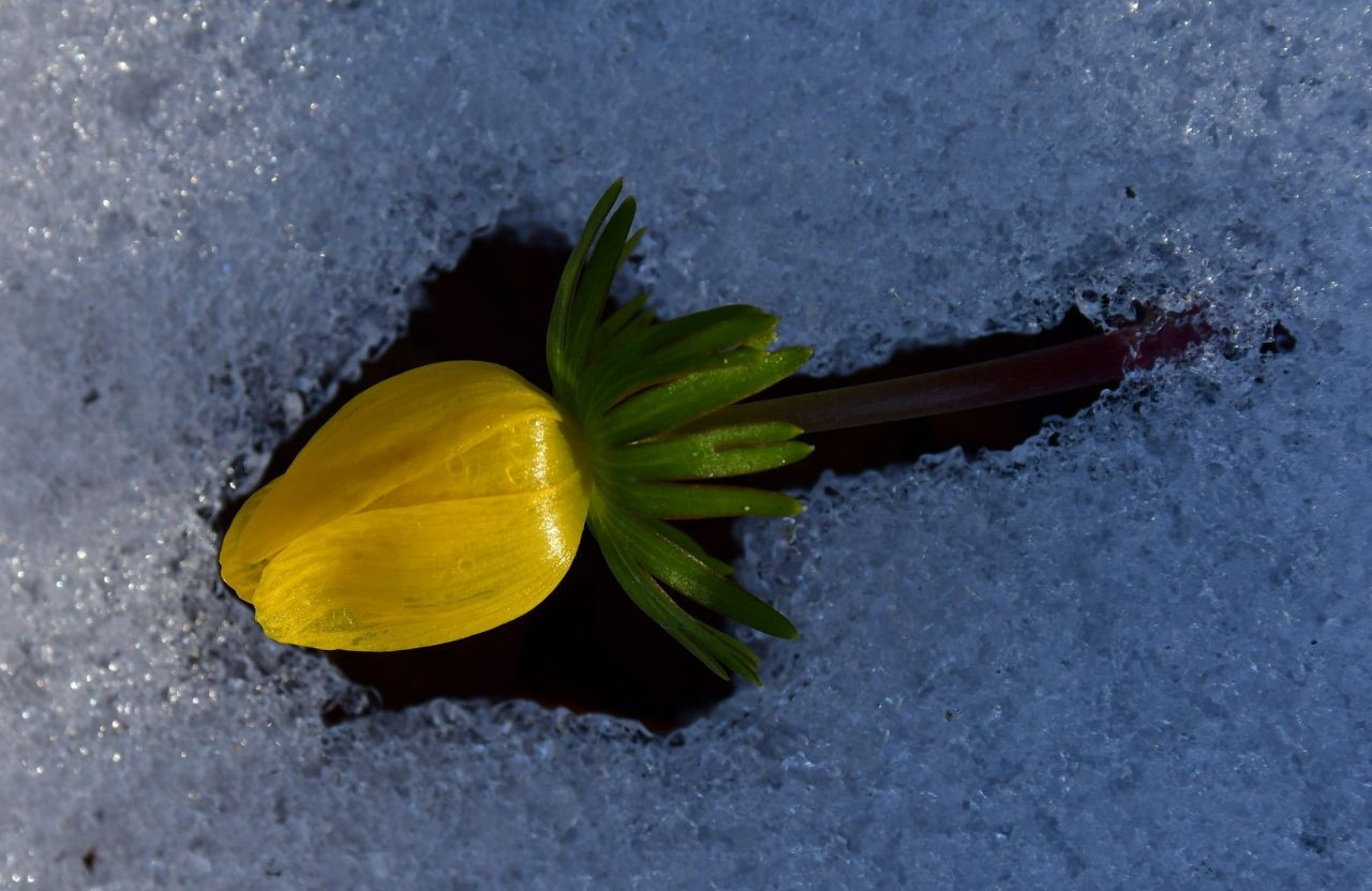 Kar ve çiçeklerin buluşması hayran bıraktı - Sayfa 3