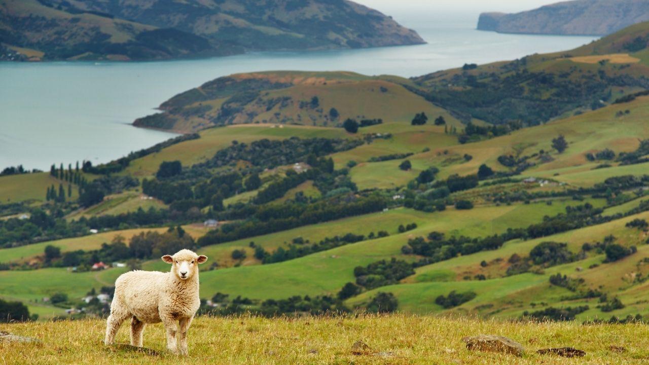 Bol oksijenli ada ülkesi: Yeni Zellanda - Sayfa 3