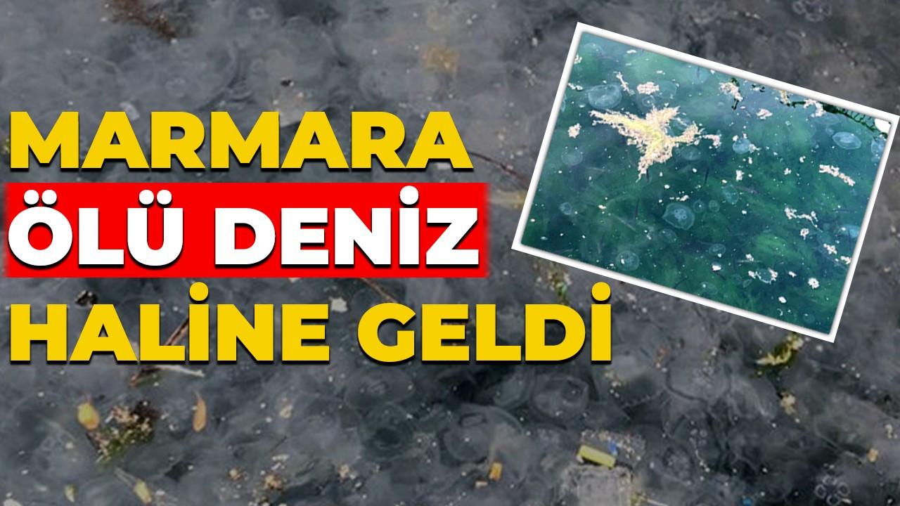 Marmara, ölü deniz haline geldi