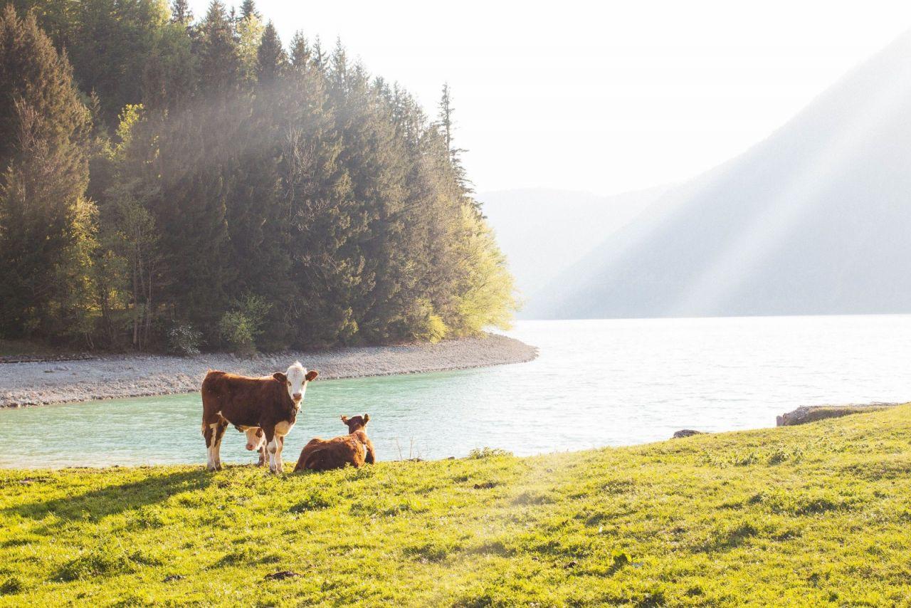 Almanya'nın en güzel gölü Walchensee büyülüyor - Sayfa 4