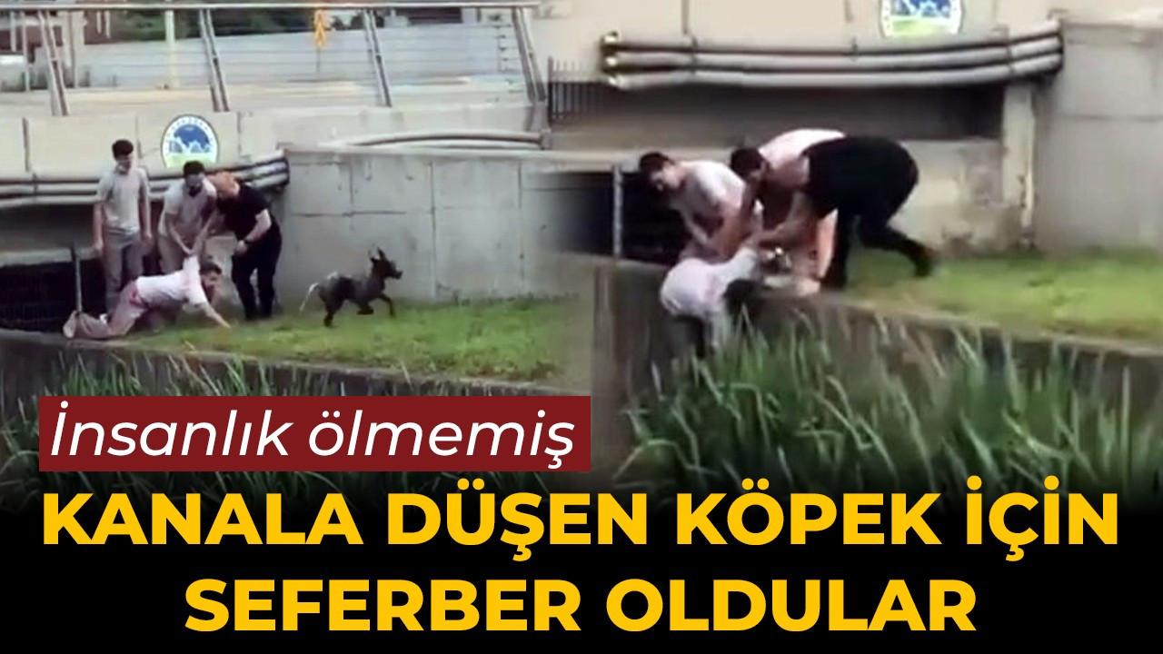 Serdivan'da insanlık ölmemiş dedirten görüntü!
