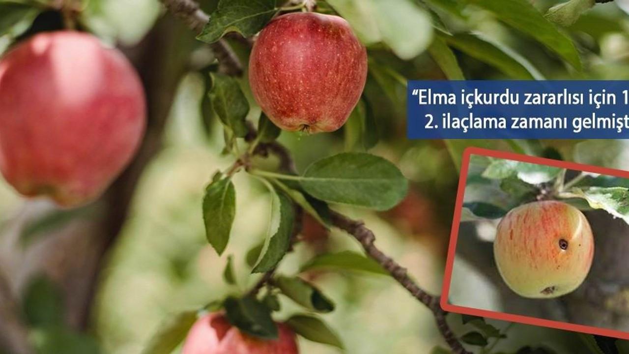 Van'da elma iç kurduna karşı ikinci ilaçlama uyarısı
