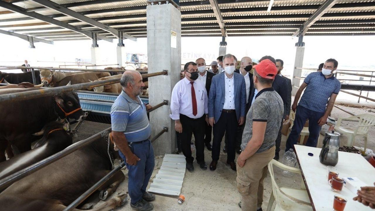 Bursa'da yeni hayvan pazarında kurbanlıklar satışta