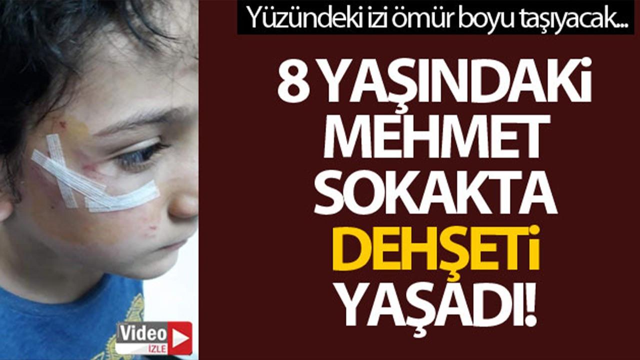 Bursa'da 8 yaşındaki çocuk yolda dehşeti yaşadı!