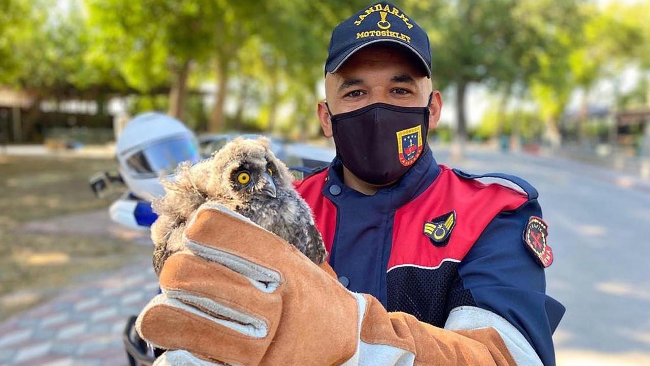 Yaralı baykuşa jandarma şefkati