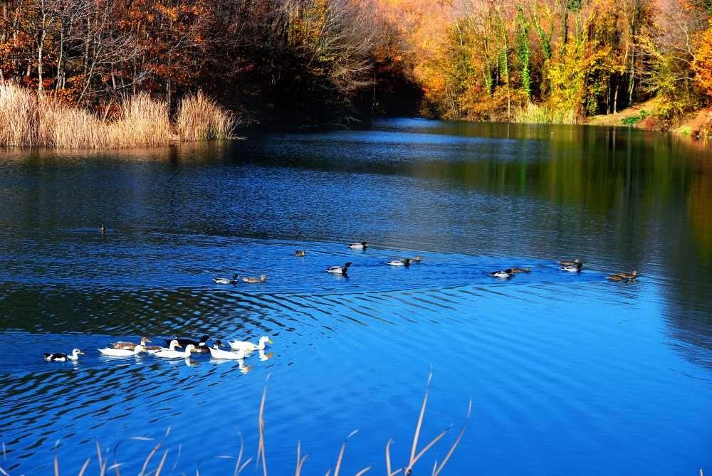Sakarya'nın Bilinmeyen Güzelliği: Saklı Göl - Sayfa 4