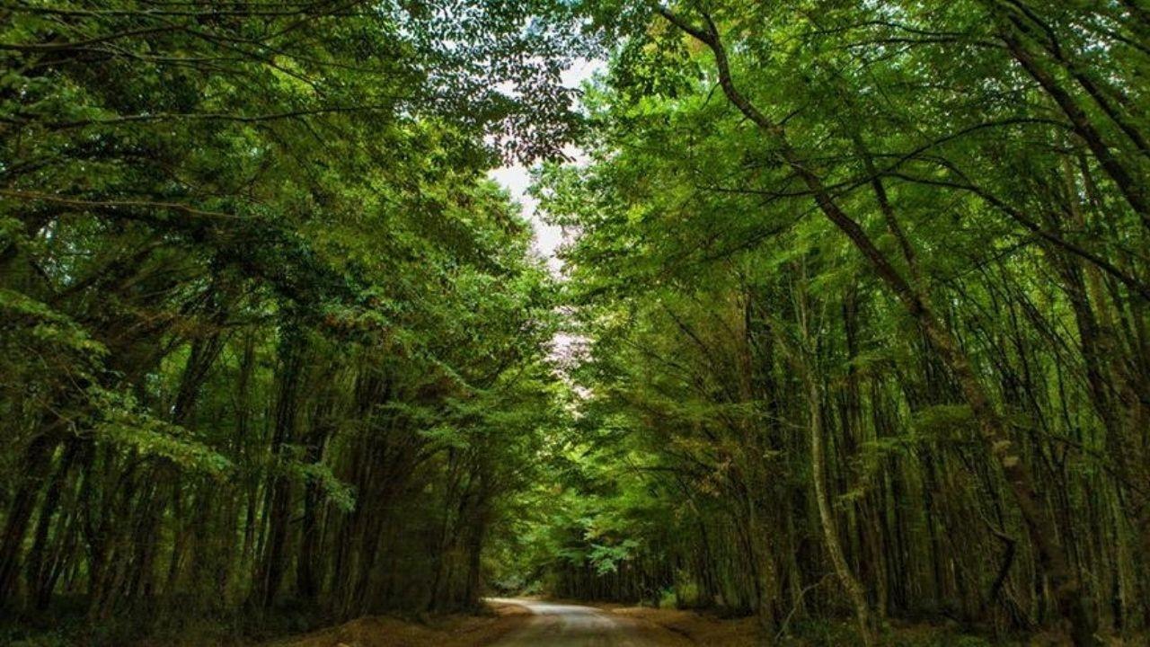Kırklareli'nde ormanlara giriş yasaklandı