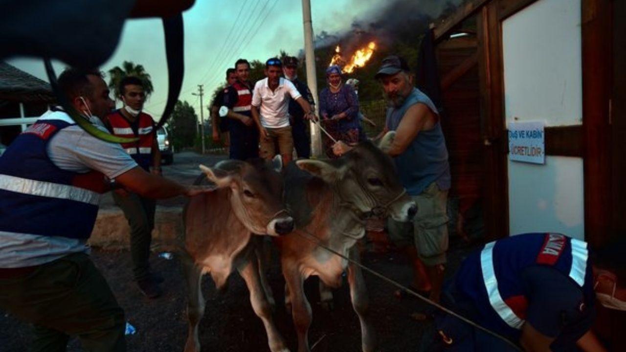 Yangın bölgesinde hayvanları korumak için canlarını yok saydılar