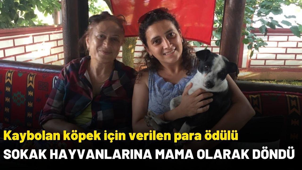 Para ödülü sokak hayvanlarına mama olarak döndü