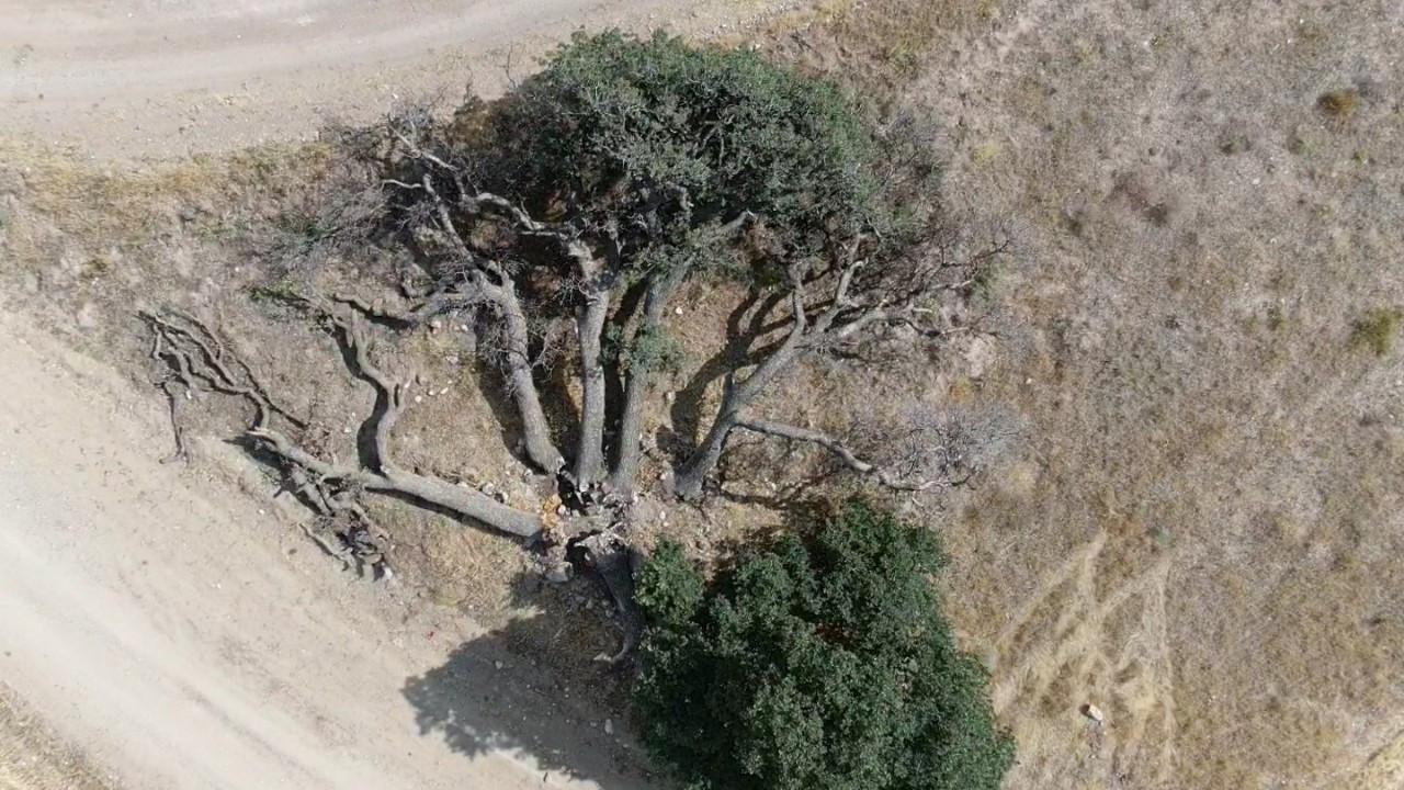 3 asırlık ağaca kimse dokunamıyor