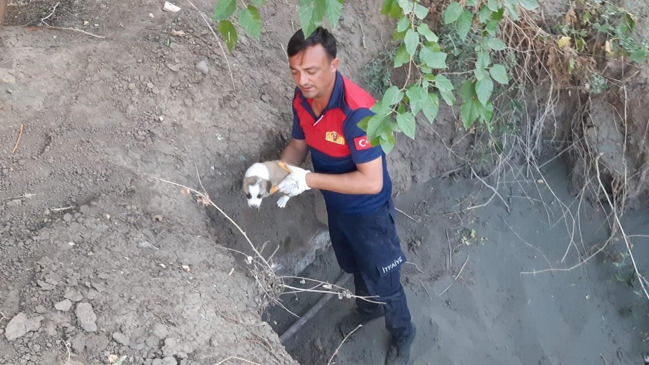 Yavru köpekler düştüğü çukurdan kurtarıldı