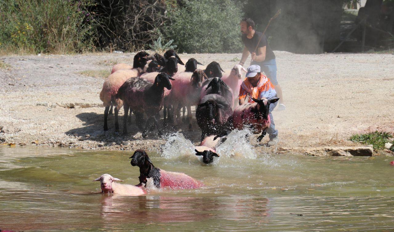 Denizli'de 8 asırlık gelenek; koyunları nehirden geçirmek - Sayfa 4