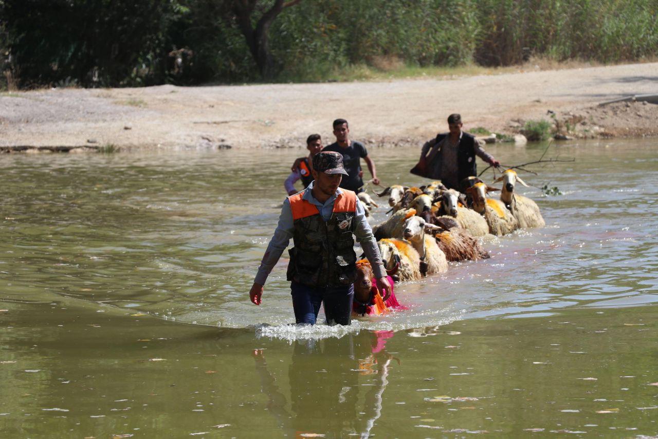 Denizli'de 8 asırlık gelenek; koyunları nehirden geçirmek - Sayfa 1