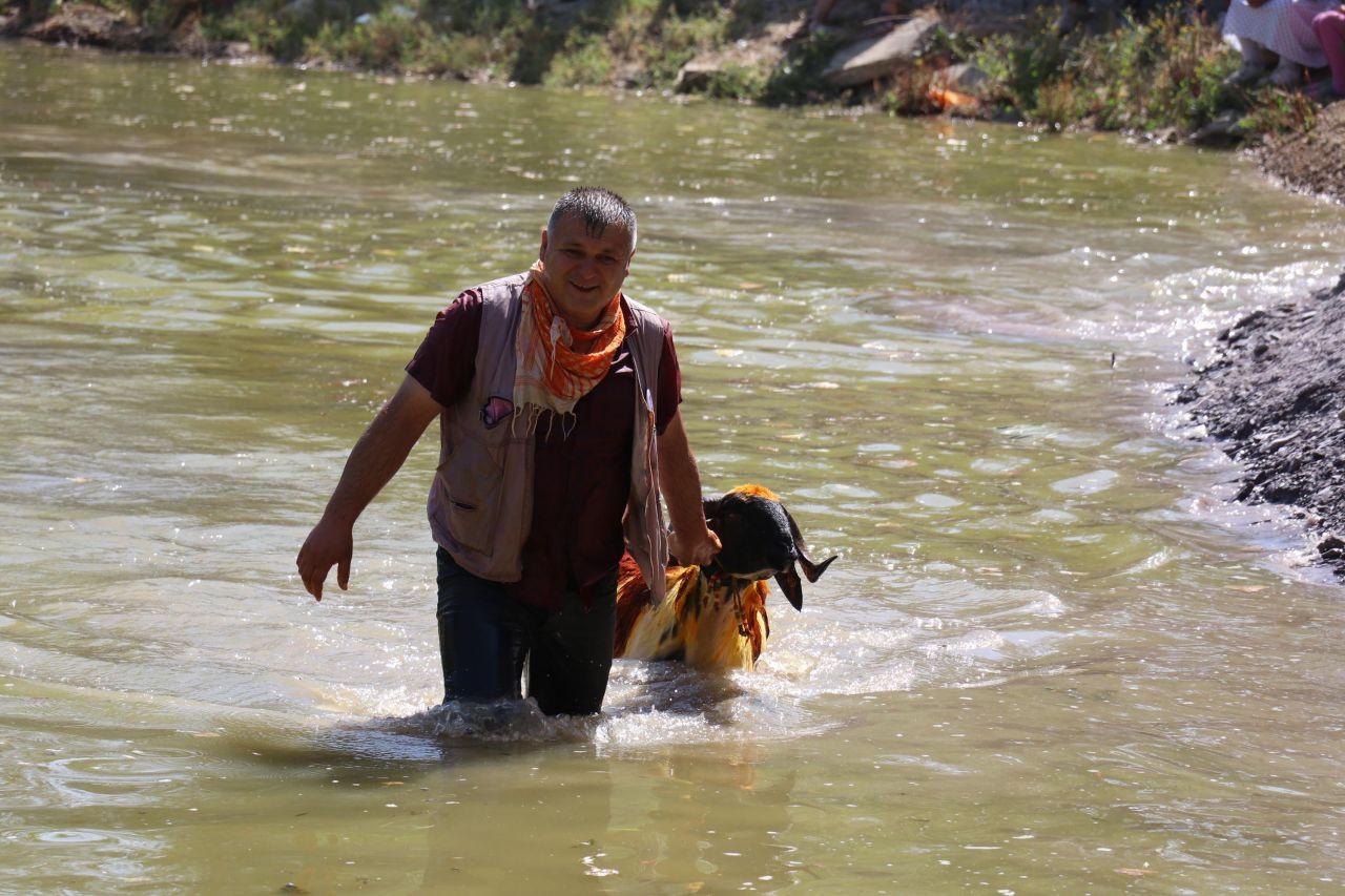 Denizli'de 8 asırlık gelenek; koyunları nehirden geçirmek - Sayfa 3
