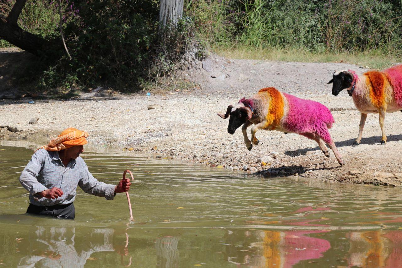 Denizli'de 8 asırlık gelenek; koyunları nehirden geçirmek - Sayfa 2