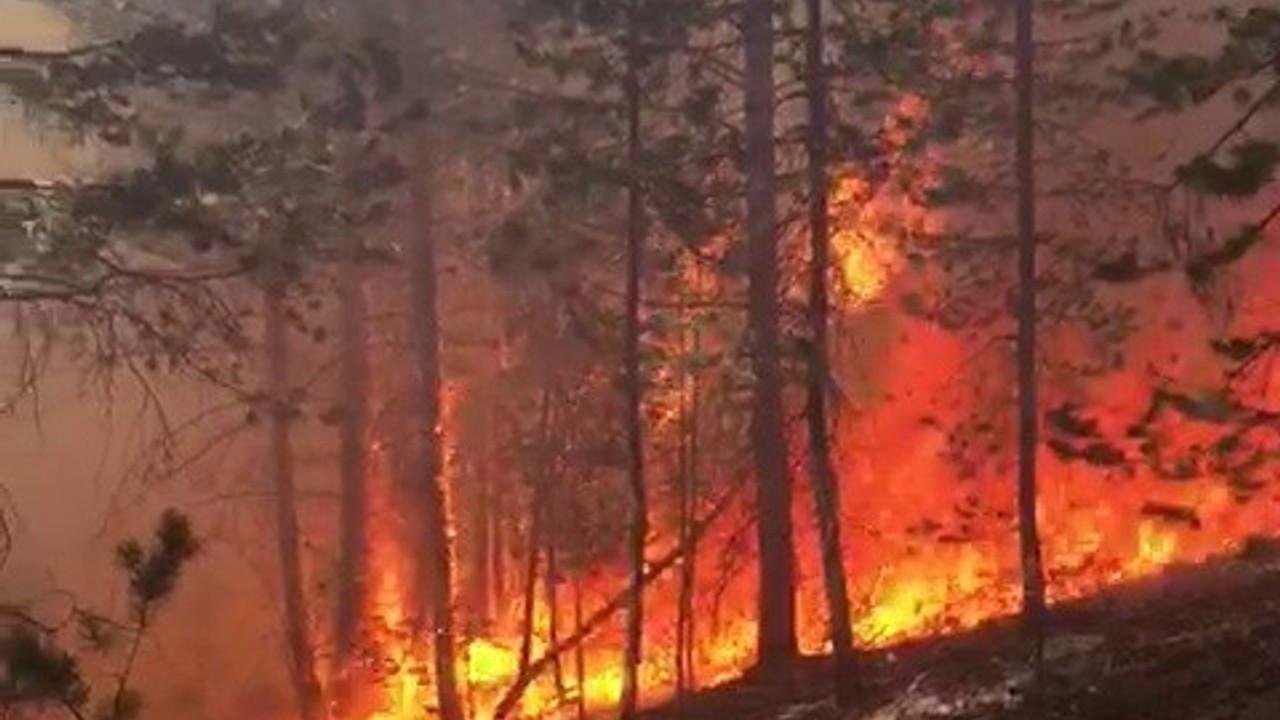 Sarıkamış Ormanları'nda korkutan yangın, ekiplerin müdahalesi sürüyor