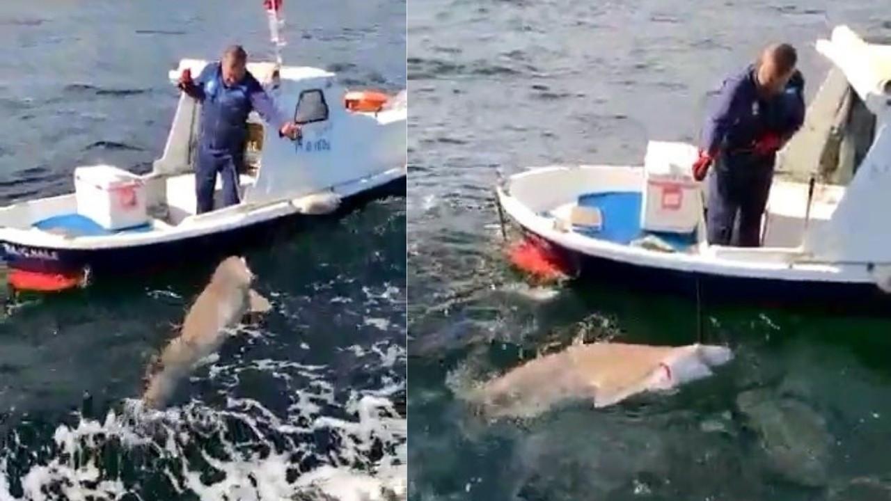 Teknenin yarı boyunda köpek balığı avladı