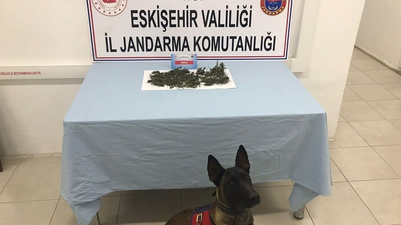 Eve saklanan uyuşturucu maddeleri jandarma narkotik köpeği Alfa buldu