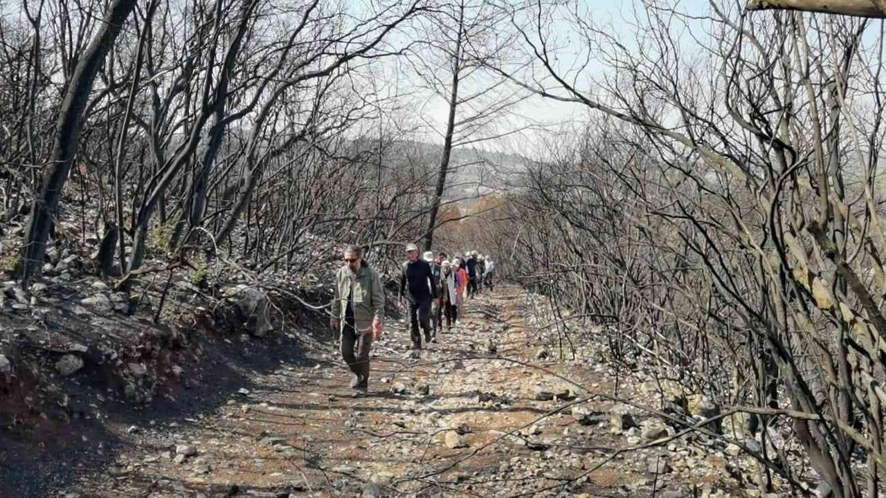 Osmaniye'de yanmış ormanlık alanda doğa yürüyüşü