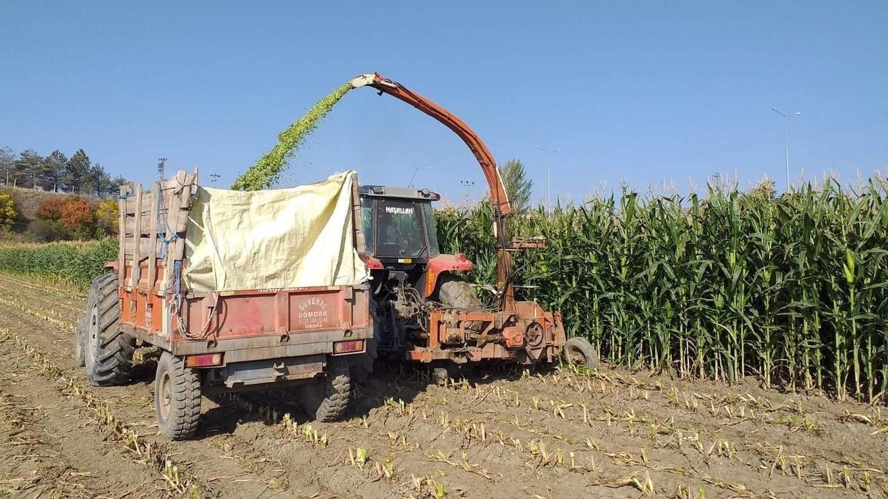 Sungurlu'da silajlık mısır hasadına başlandı