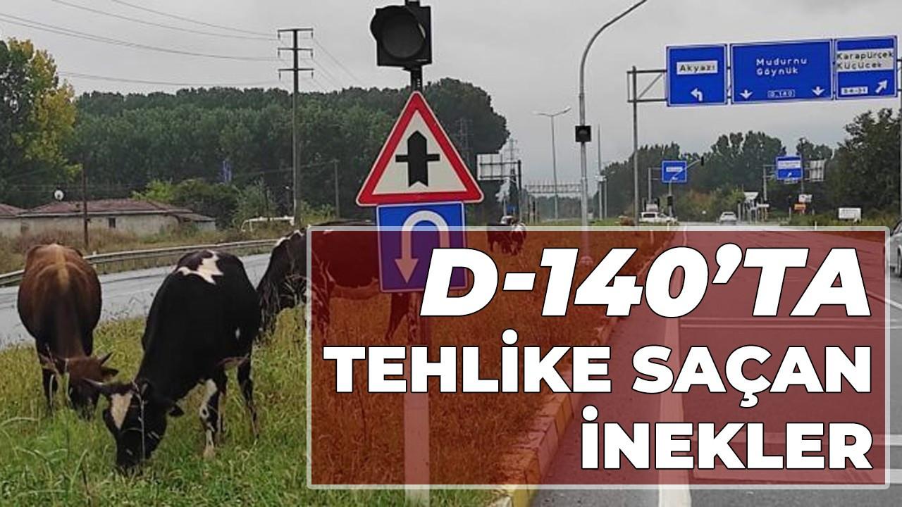 D-140'ta tehlike saçan inekler!