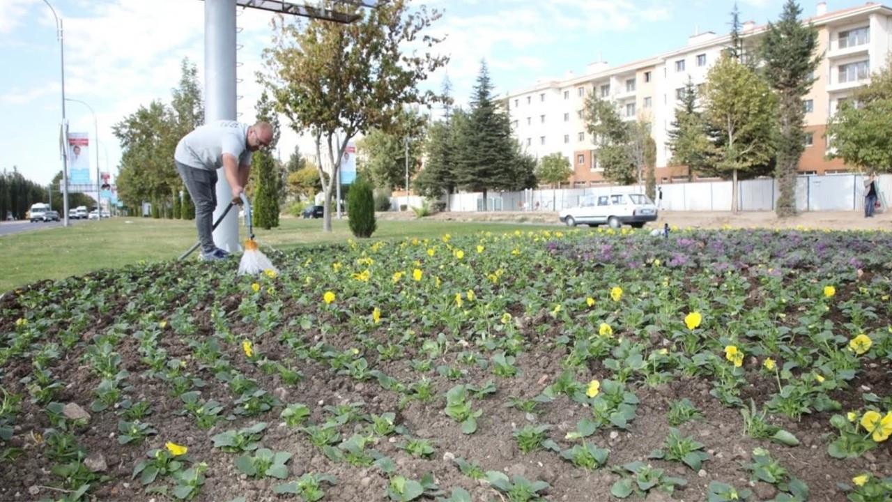 Elazığ Belediyesinden mevsimlik çiçek dikimi